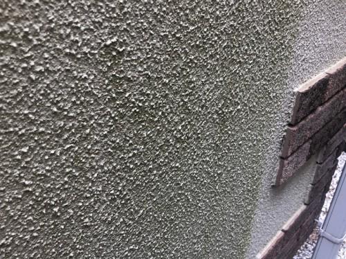 苔・藻の発生があるモルタル外壁