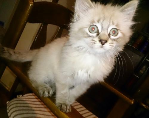 子猫の飼育、気をつけること