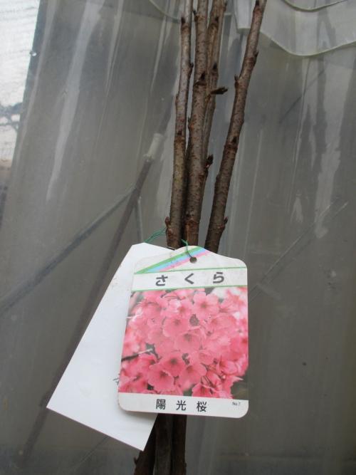 埼玉植物園の卸部です!植木、苗木のことならお任せください!