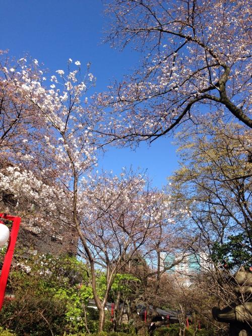 新高輪プリンスホテルで桜咲く対面鑑定
