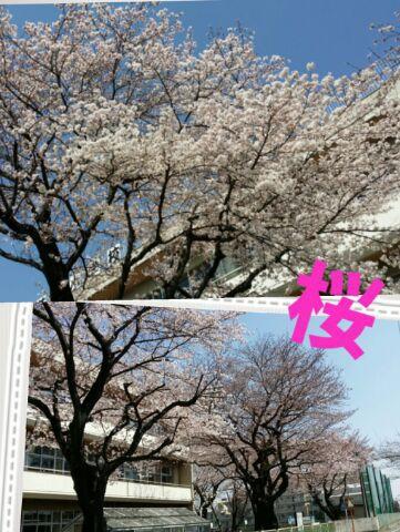 散歩しながらのお花見d(⌒ー⌒)!