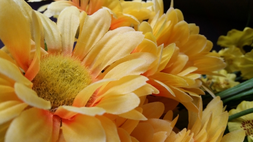 父の日に贈る花