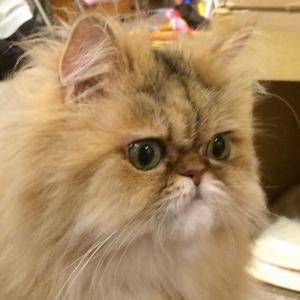猫ちゃんシッター