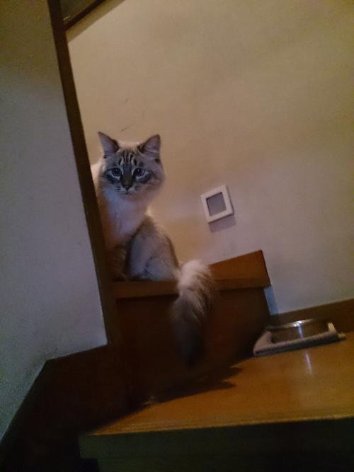 看板猫ですo(^-^o)(o^-^)o