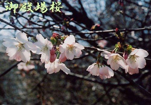 埼玉植物園は開花ラッシュ!まで5秒前(笑)