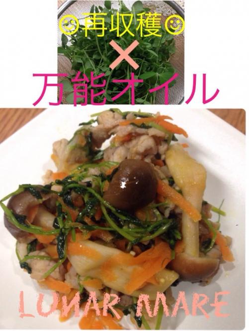 【健康美容食】豆苗再収穫&ココナッツオイル効果♪