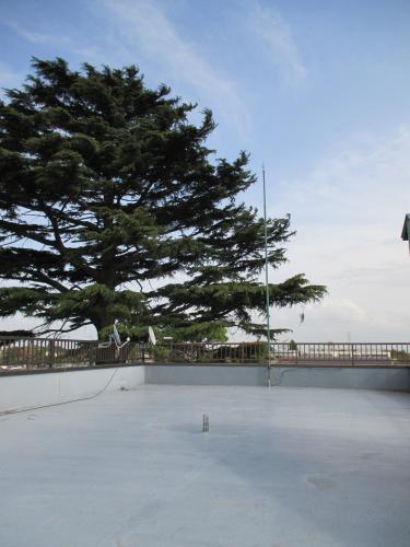 安行四季彩マットの屋上緑化!ついに埼玉植物園 社屋施工へ!