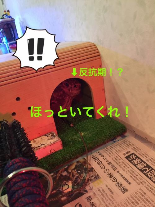 今日の徳光09