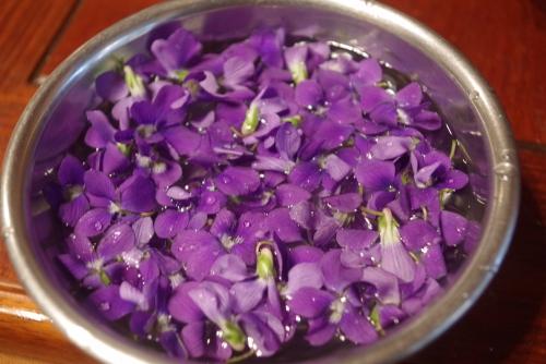 スミレの花❣️