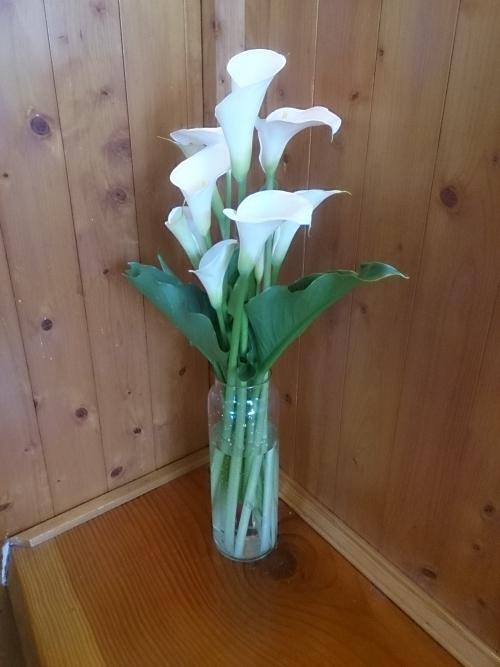 お客さまからカラーの花を頂きました。花言葉は「清浄」