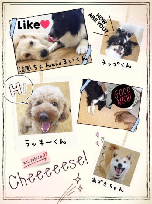 香港の犬事情から日本を見てみる