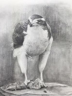Mさんのデッサン『鷹』