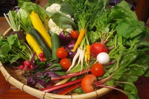 八ヶ岳から夏野菜届きました!