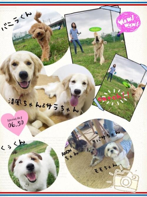 スペインの犬事情から日本を見てみる