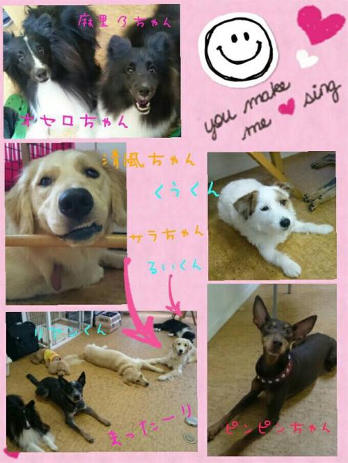 犬と過ごす幸せ
