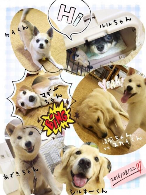フィンランドの犬事情から日本を見てみる