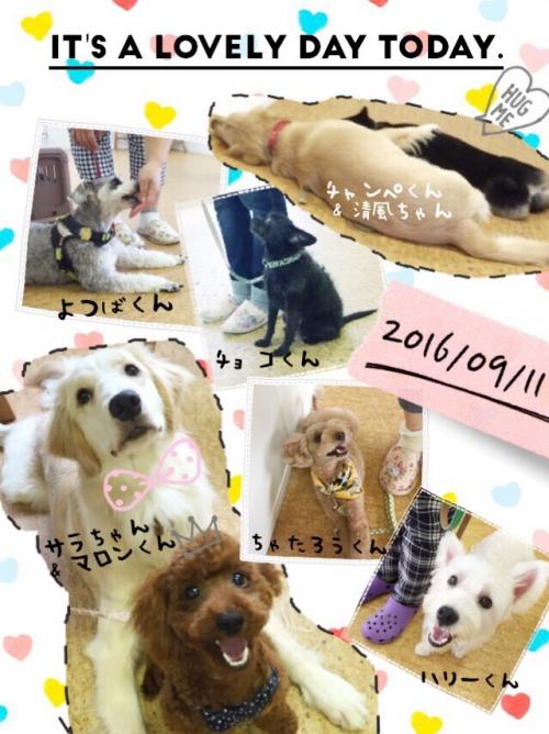 ギリシャの犬事情から日本を見てみる