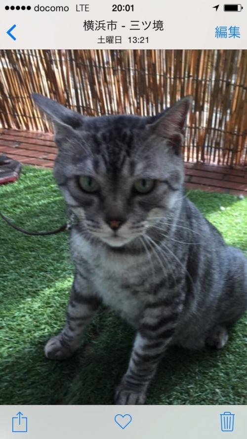 動物家族♪猫「グレ」