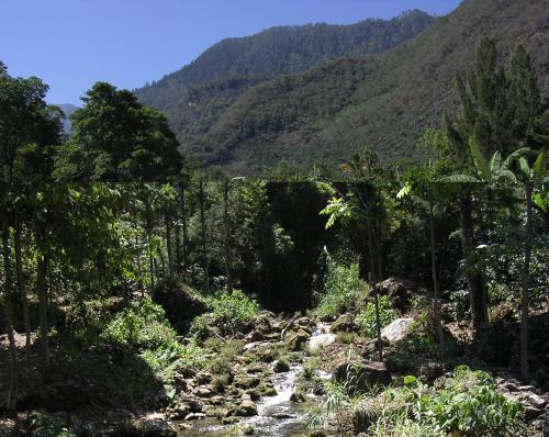 グァテマラウエウエテナンゴ地区『ラ・ボルサ農園』