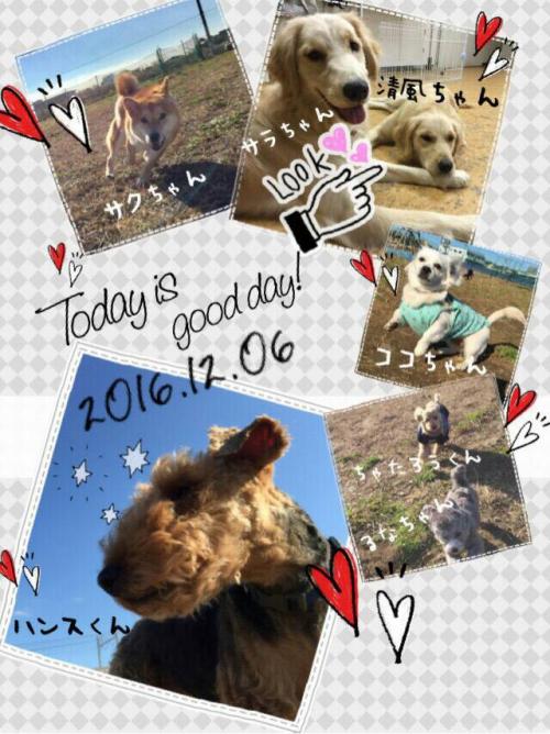 カンボジアの犬事情から日本を見てみる