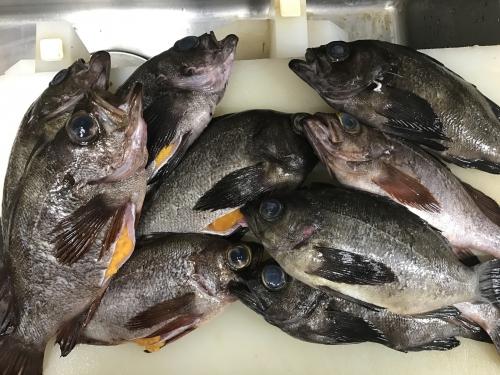 美味しい煮魚  めばるの煮付け