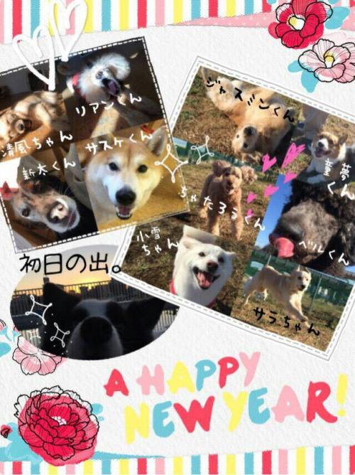 ベルギーの犬事情から日本を見てみる