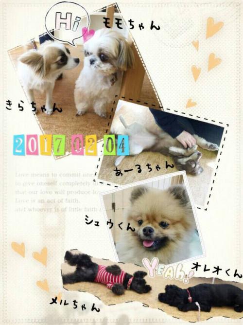 ベトナムの犬事情から日本を見てみる