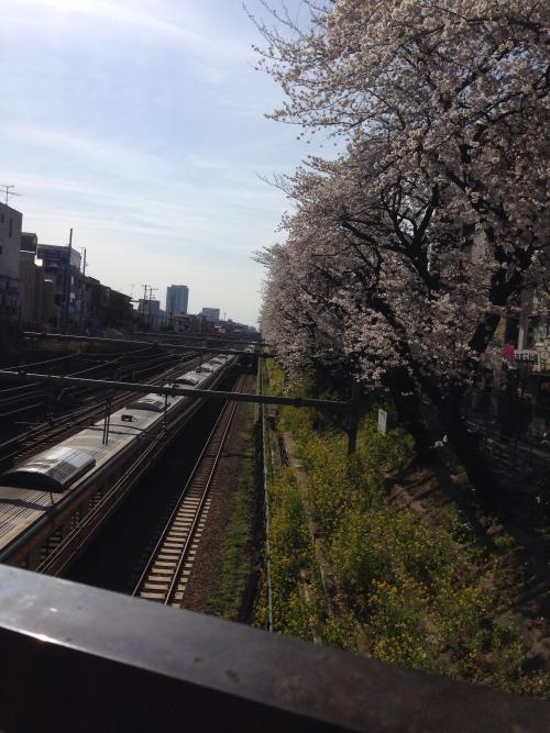 東中野 駅前の桜