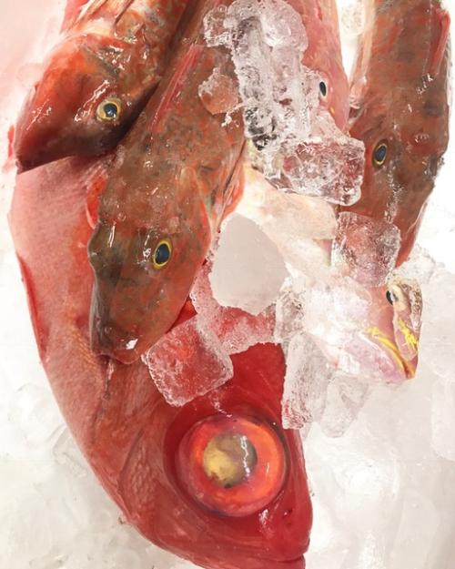 金目鯛 ホウボウ イトヨリ