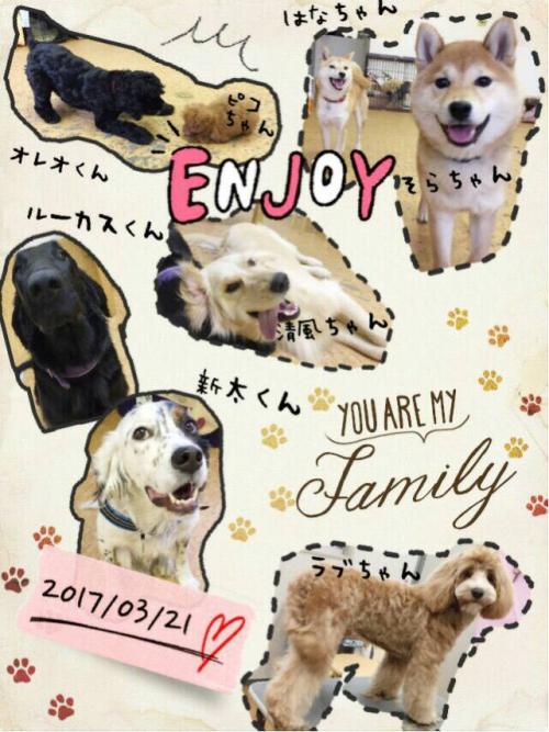 ペルーの犬事情から日本を見てみる