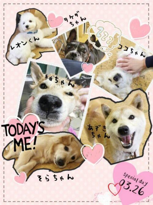 タンザニアの犬事情から日本を見てみる