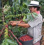 コロンビアコーヒー《大粒で肉厚、力強いボディに苦味が魅力》