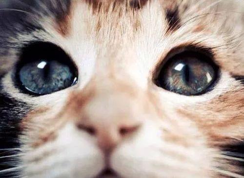 猫と犬のリハビリ&ケアー ヘルニア改善 綱島発信