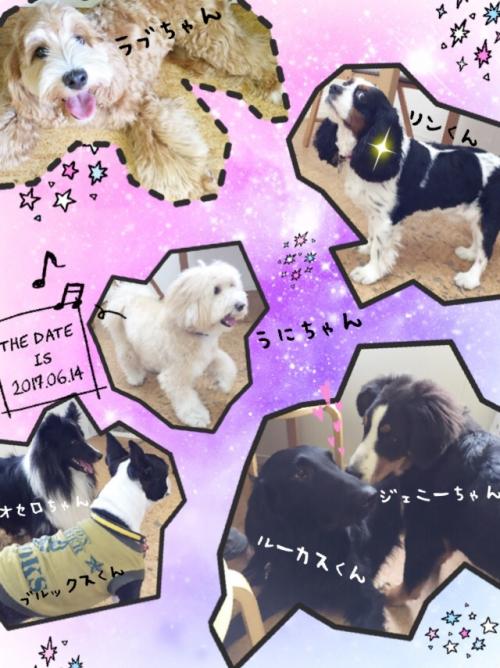 香港の犬事情