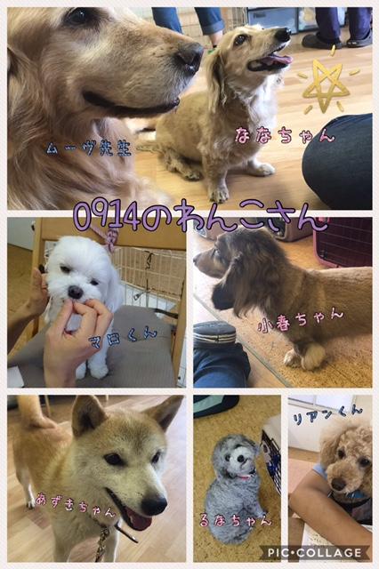 犬のギネス記録