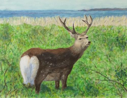 世田谷区在住のYさんの水彩画「草原の鹿」