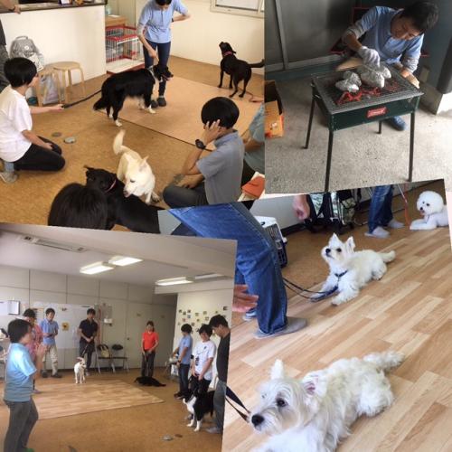 犬の訓練は面白い事を再認識した1日