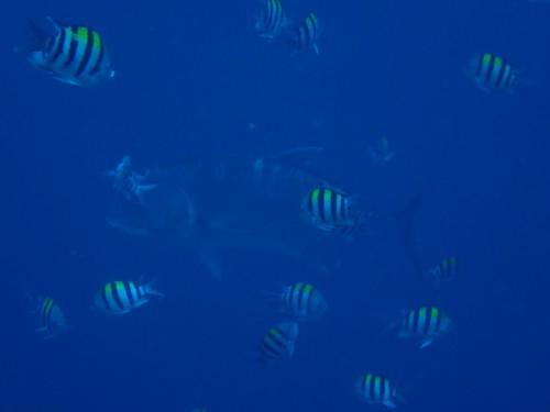 やっと、バリ島ダイビングの2本目!