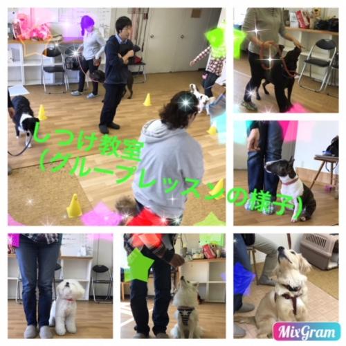 犬と散歩   トレーナー七つ道具