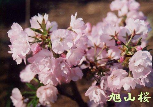 こどもの日な今日は、桜の中に隠れた宝探しゲ~ム!