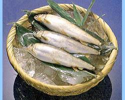 長良川一部解禁若鮎の季節