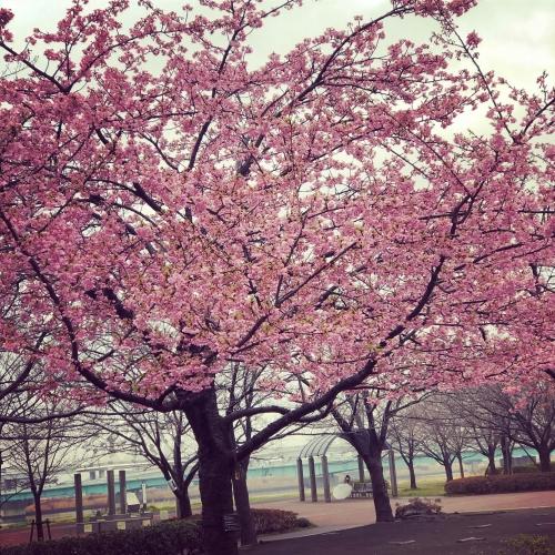 今日から3月!春の体調不良もオリンピア鍼灸整骨院