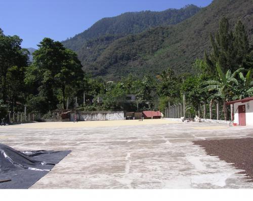 グァテマラの地域生産からブランド農園へ