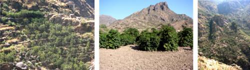 甘いフルーティな香りが特徴のイエメン