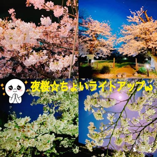 お休み(*´▽`*)