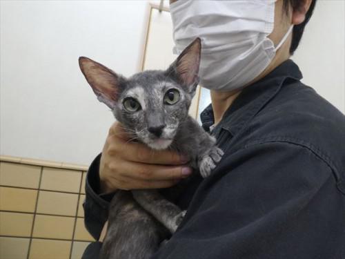 6/27ワクチン オリエンタル、フレブル 動物病院 名古屋市