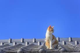 相模原市で安くて評判の屋根塗装はマルセイテックへお任せ!