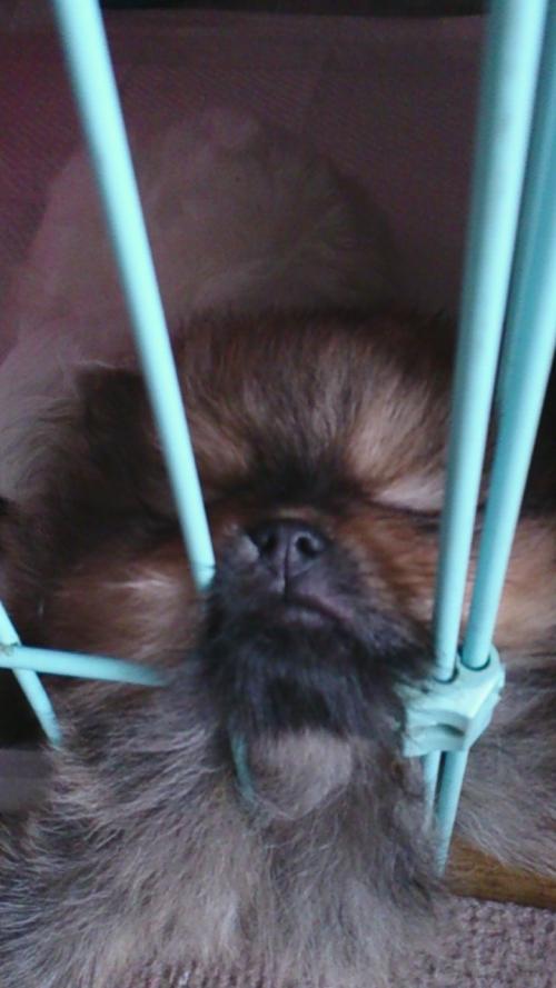 暑い日でも、心癒される子犬  1